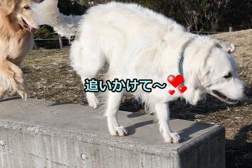 s-IMG_9453_20130128215734.jpg