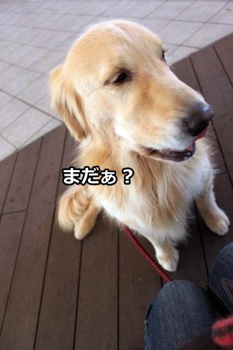 s-IMG_9553.jpg