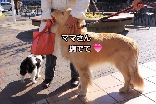 s-IMG_9574_20130202094027.jpg