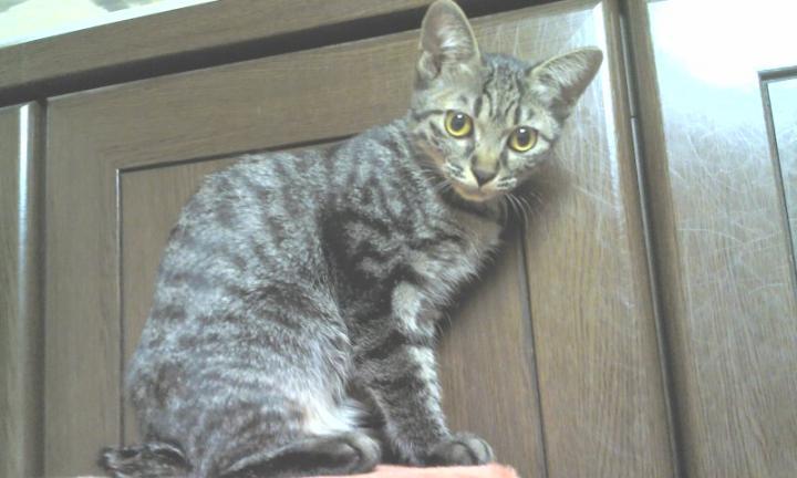 子猫20121224-01