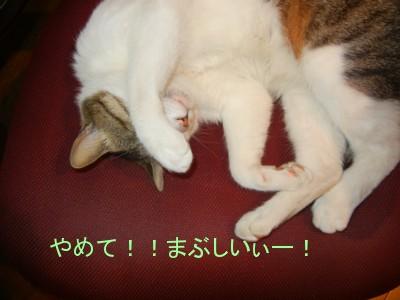 ぼく 猫のねりねりです。