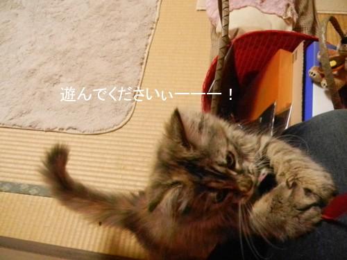 桜子と遊ぶのが楽しい。