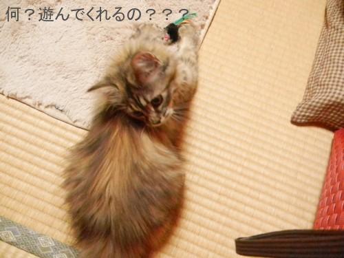 桜子は元気です。