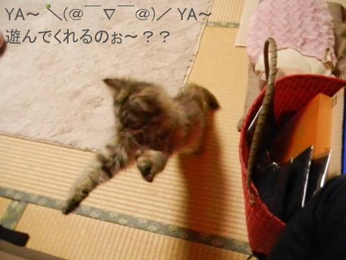 桜子と遊ぼう