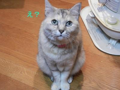 私猫のるびーです!!