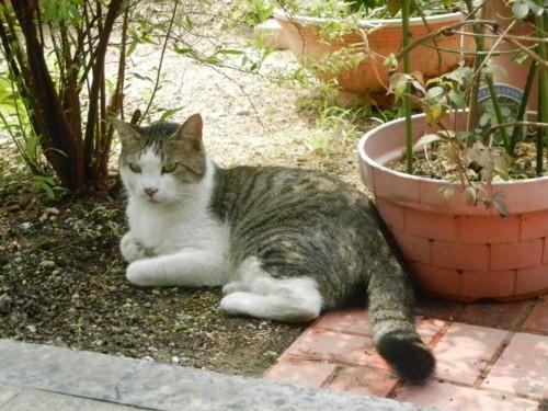 庭で涼しい場所で休んでいます。