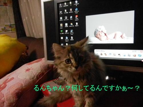 桜子の日常