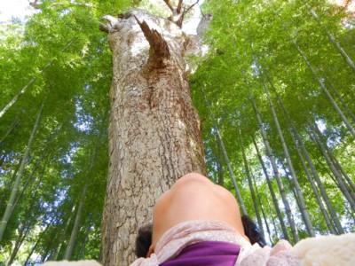 木々に癒されました。