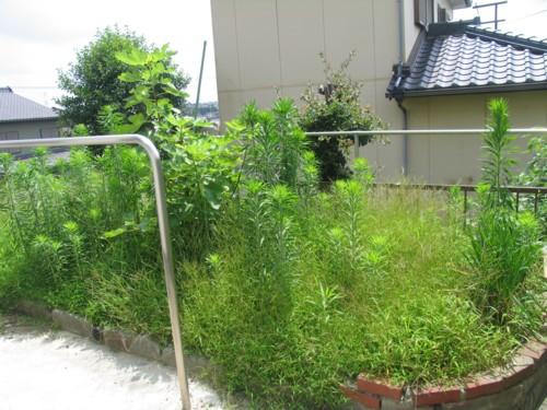 残念な庭2