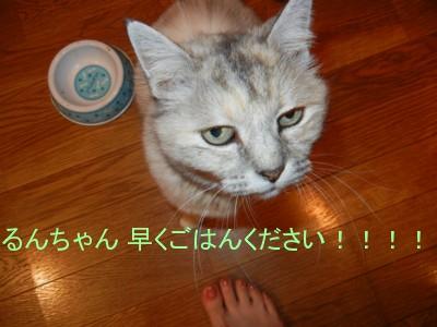ごはんくださいよ!!