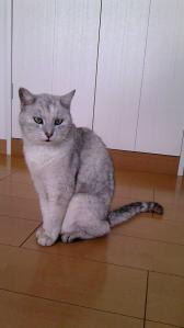 ユキ 20120321-1