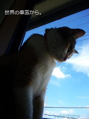 ミュー 窓から