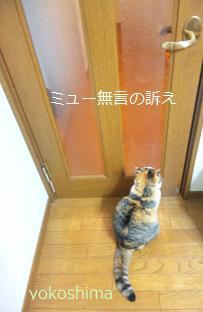 ミュー 廊下出たい1
