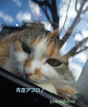 ミュー 青空アフロ