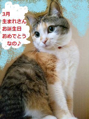 2012 3おめでとうmyu-