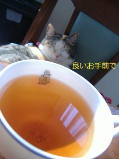 2012 お茶ネコミュー
