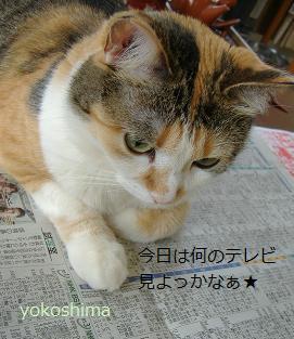 ミュー 新聞