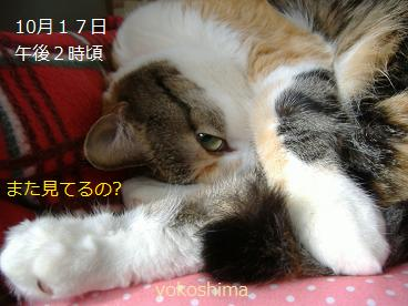 ミュー 復活☆