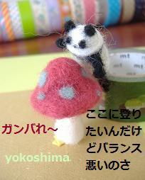 yomoパンダ3
