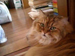 Cat+also+072_convert_20110331204106.jpg