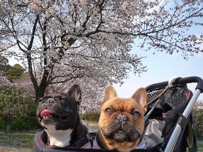 桜と・・・4