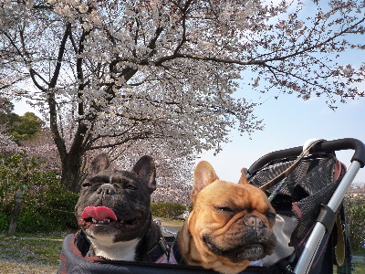 桜と・・・3