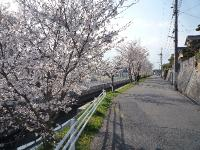 散歩みち1