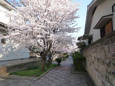 散歩みち3