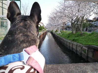 散歩みち8