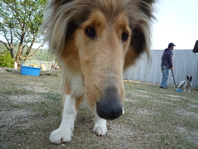 1看板犬ベス