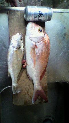 10月22日 釣果の一部