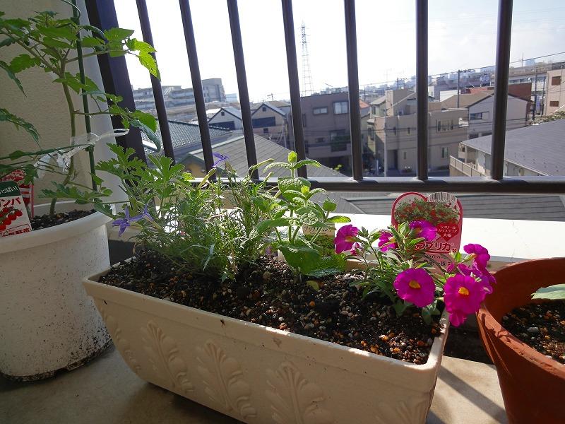 家庭菜園01