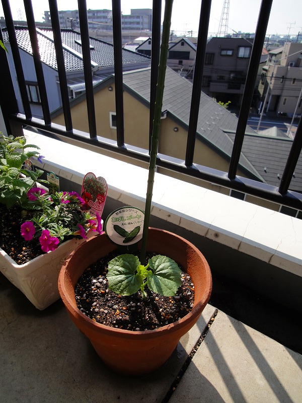 家庭菜園02