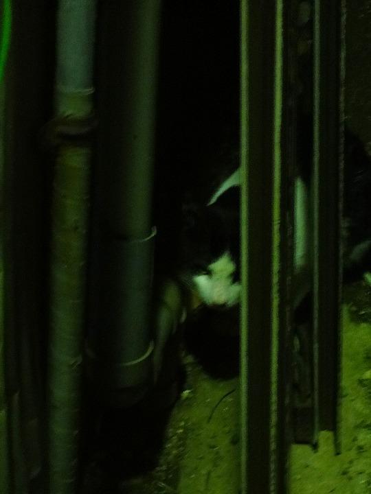 隠れ猫00