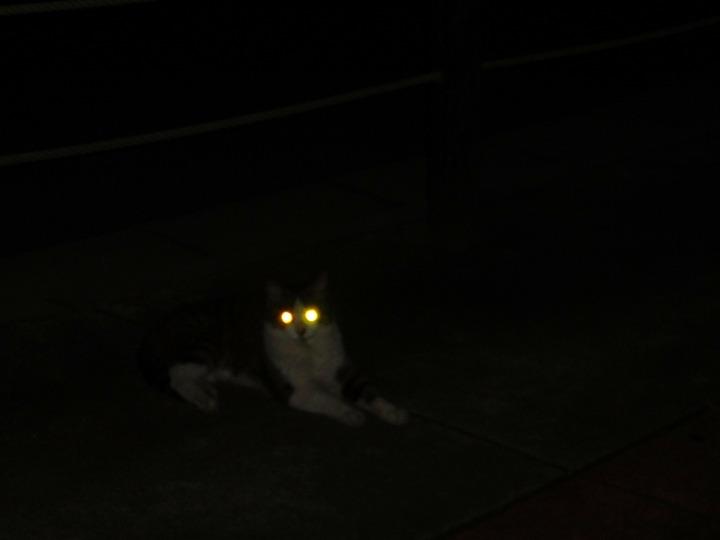 隠れ猫02