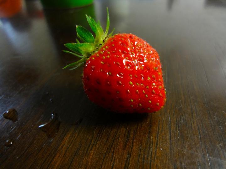イチゴ収穫00