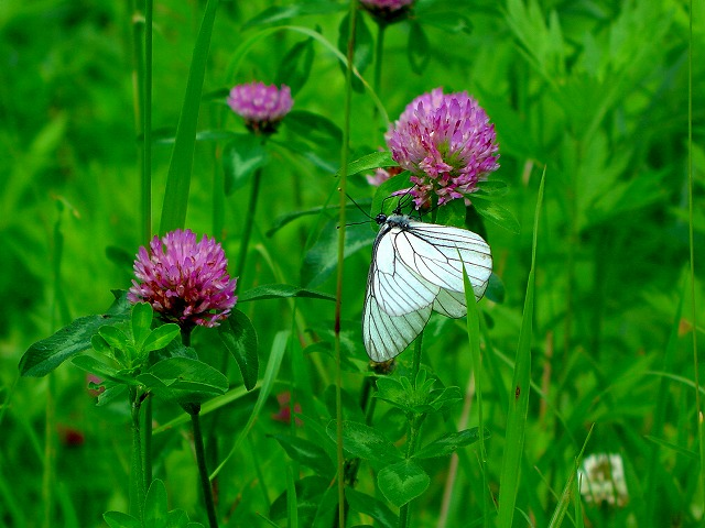 雑草と蝶01