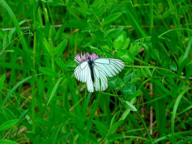雑草と蝶03