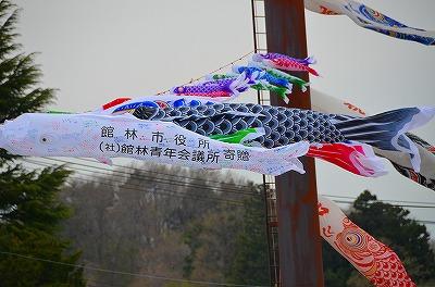 4月30日鯉のぼりDSC_9892 (99)