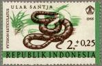 インドネシア・ヘビ(エラー)