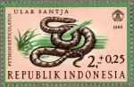 インドネシア・ヘビ(ノーマル)
