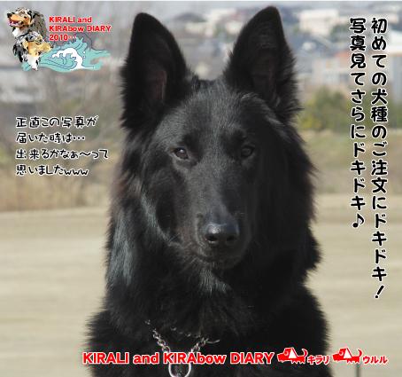 イラスト紹介1