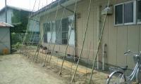 H230613ゴーヤ棚完成(東側)