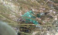 H230622横岳根曲がり竹採り