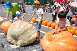 4かぼちゃ11.09.11