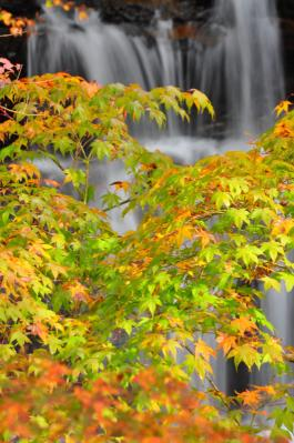 1みかえりの滝11.11.12