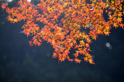 10昇龍の滝11.11.12