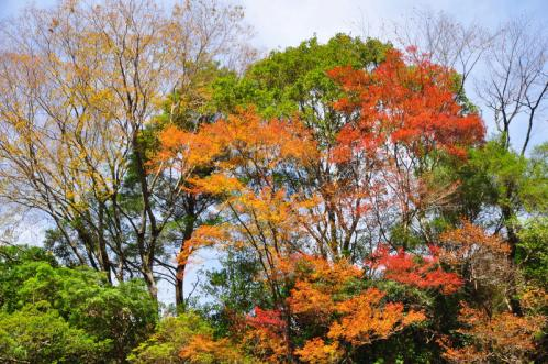 14昇龍の滝11.11.12
