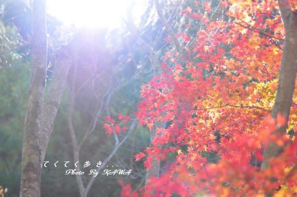 11滑川11.11.20