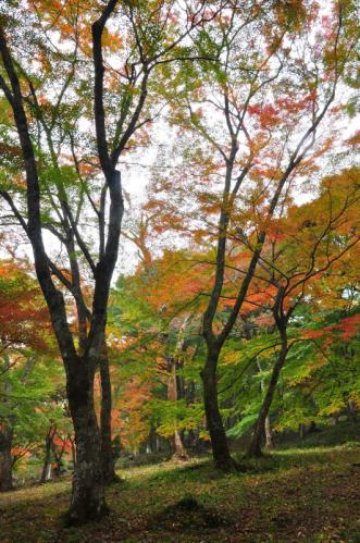 2稲荷山11.11.23
